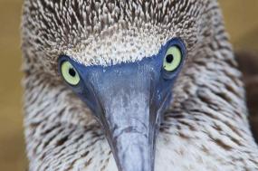 Galapagos Encounter Itinerary B - Premium   tour