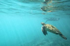 Galápagos — West Islands aboard the San Jose tour