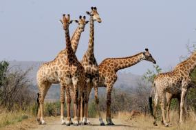 South Africa Adventure Safari tour