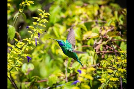 Costa Rica Canopy and Coast tour