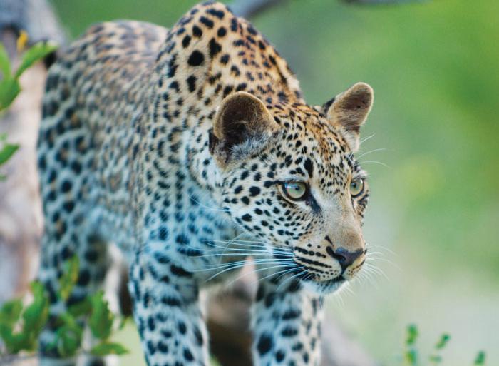 Johannesburg Kruger National Park Kruger Experience - Lodge (3 days) Trip
