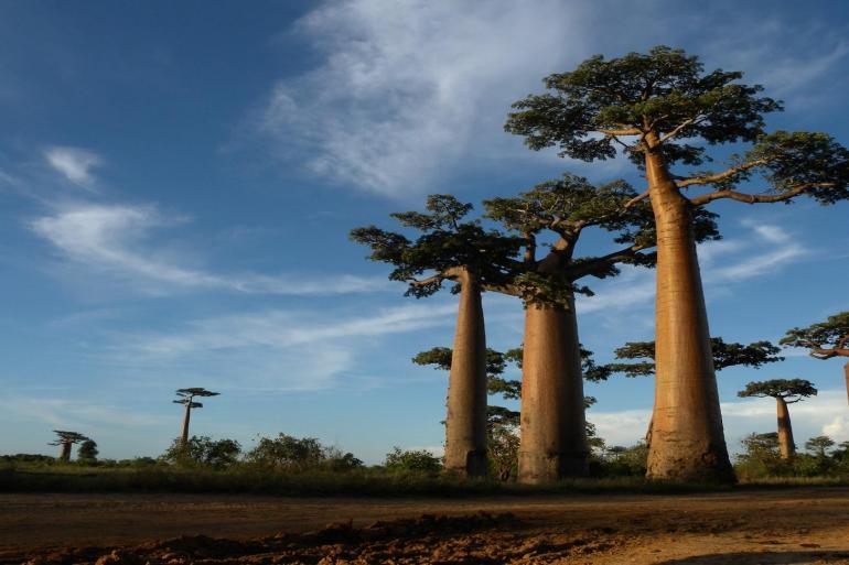 1000 Views of Madagascar tour