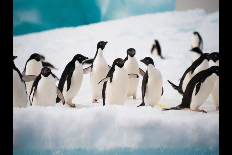 Nature & Wildlife Wildlife viewing The Antarctic Peninsula and Weddell Sea - Fly and Cruise - M/V Polar Pioneer package