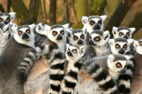 Magic of Madagascar tour