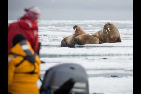 Jewels of the Russian Arctic: Franz Josef Land and Novaya Zemlya tour