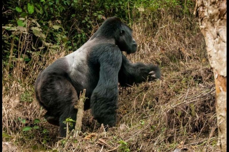 3 Days Flying Gorilla Package to Bwindi National Park tour