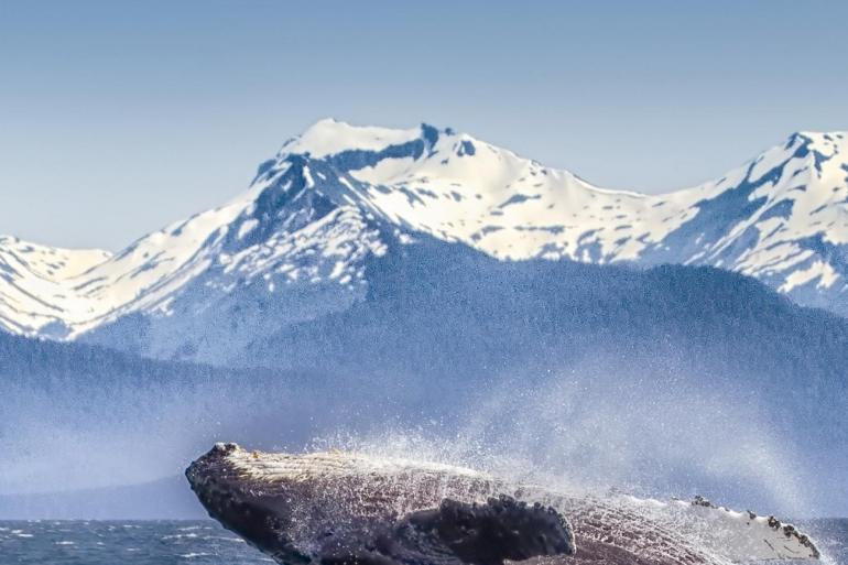 Spectacular Canadian Rockies with Rocky Mountaineer Goldleaf and Alaska Cruise Ocean-view Stateroom tour