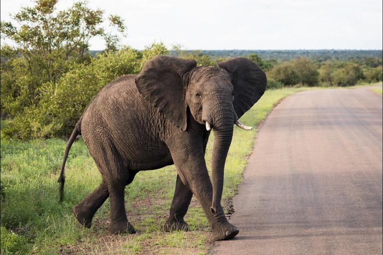 Safari Wildlife viewing Kruger, Coast & Cape package