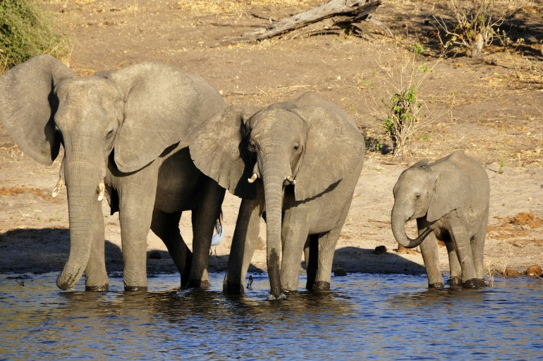 Elephant water-South Africa_73139_P