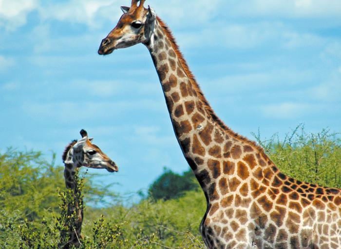 Johannesburg Kruger National Park Kruger Experience - Lodge (5 days) Trip