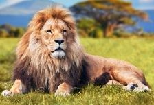 Safaris tour