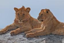 Serengeti National Park tour