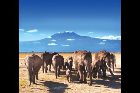 Highlights of Tanzania tour
