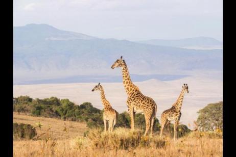 Cycle Tanzania - Kilimanjaro to Ngorongoro tour