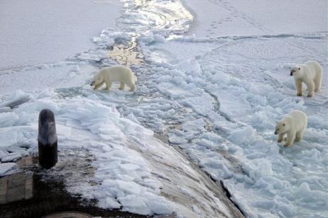 North Spitsbergen - Polar Bear Special tour