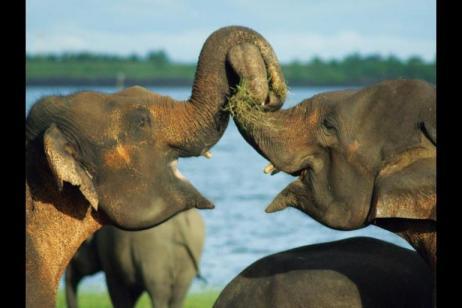 Secrets Of Sri Lanka tour