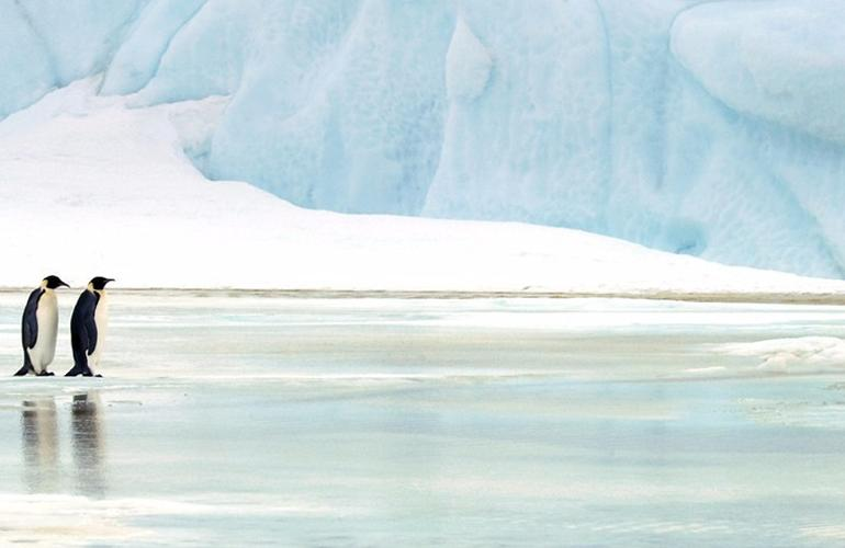 Antarctic Expedition: Weddell Sea & Emperor Penguins tour