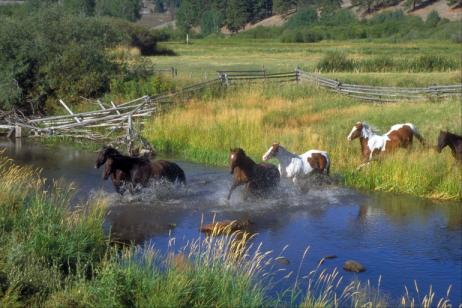 Montana Dude Ranch Vacation tour