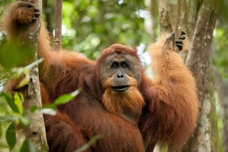 Primates & Dragons of Indonesia tour