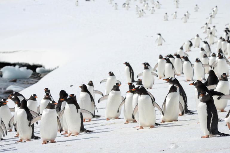 Falklands, South Georgia & Antarctica Explorer tour
