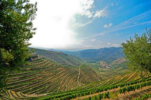 Portugal's Wine Regions tour