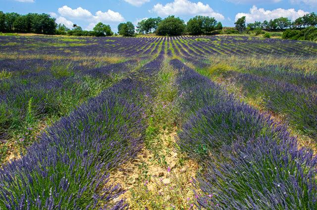 Provence Self-Guided Walking tour