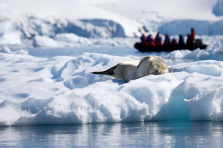 Antarctic Peninsula Ushuaia Antarctic Explorer from Ushuaia 10 day Trip