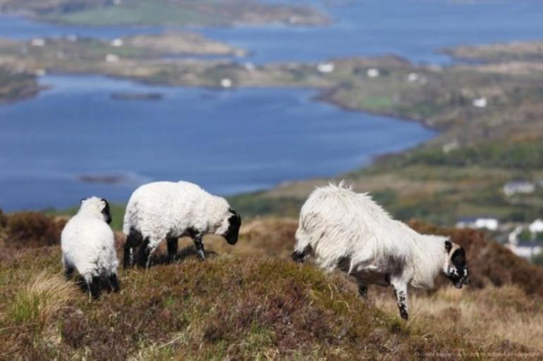 Connemara - Self Guided - 7 Days tour