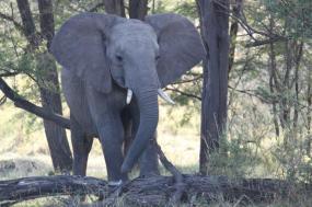 13-Day East Africa Safari tour