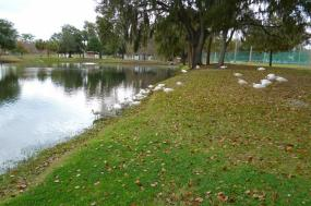 Great Rivers of Florida Cruise tour