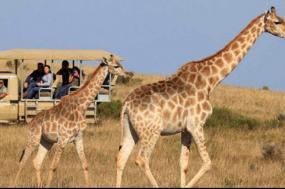 Garden Route + Safari tour