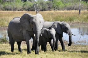 5 Nights In the Moremi Game Reserve and The Okavango Delta tour