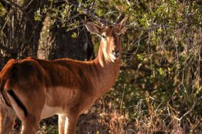 Affordable Southern Safari – Cape Town & Wildlife Safari tour