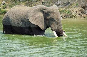 13 Days primates and wildlife Uganda safari