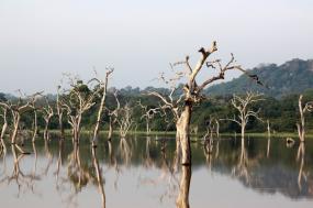 Natural Wonders of Sri Lanka