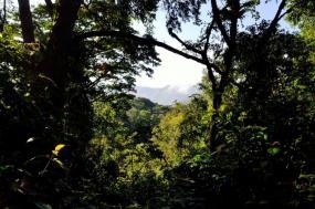 21 Days Uganda Primates, Wildlife And Adventure Safari