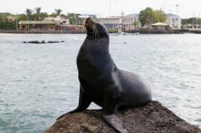 Galapagos Islands: Wildlife Odyssey