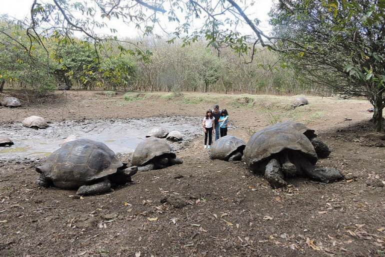 Tortoise view-Galapagos_Equador_p