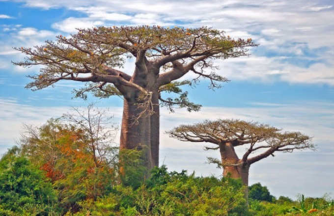 Like Nowhere Else on Earth: The Wildlife & Cultures of Madagascar tour