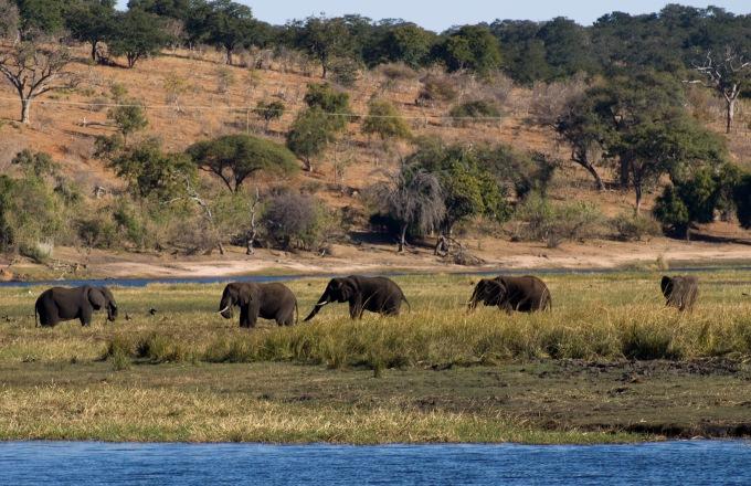 Southern African Cruise Safari: South Africa & Botswana tour