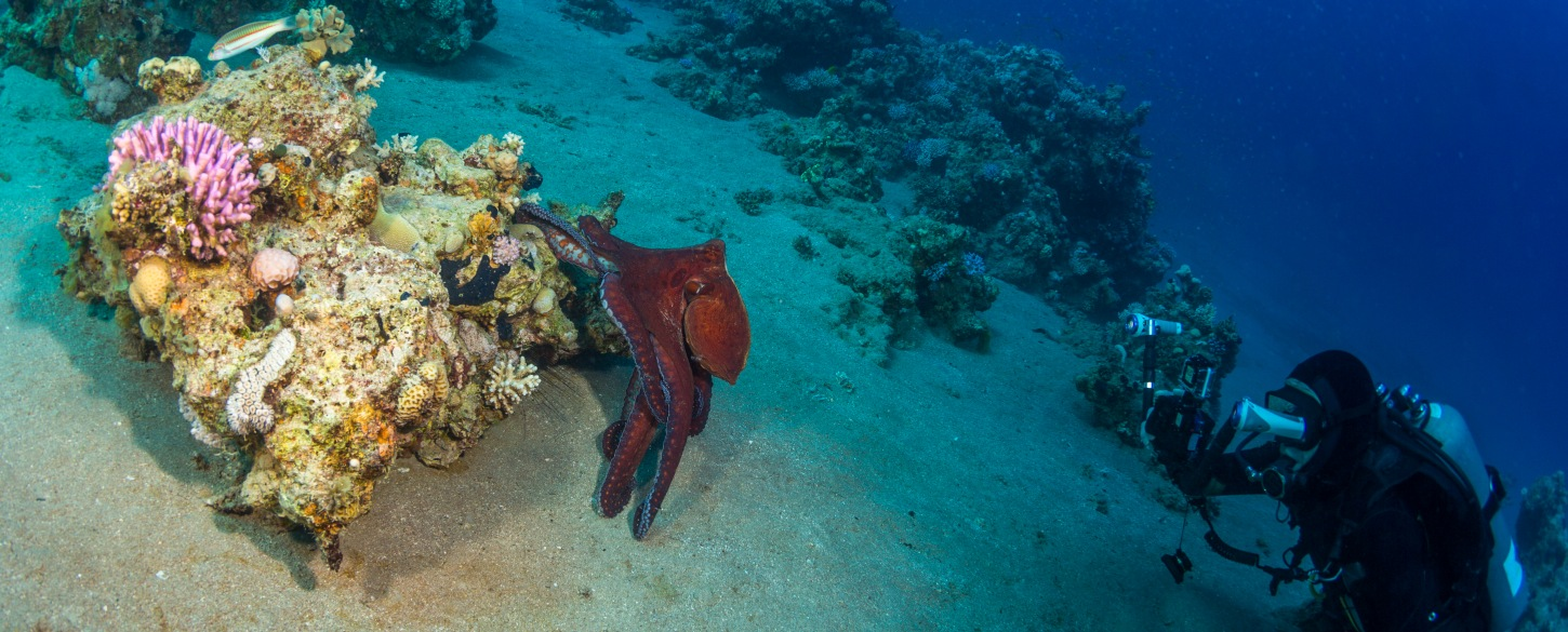 Undersea wildlife on Scuba Diving & Snorkeling tour