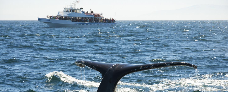 Whale breach top experience small ship cruises