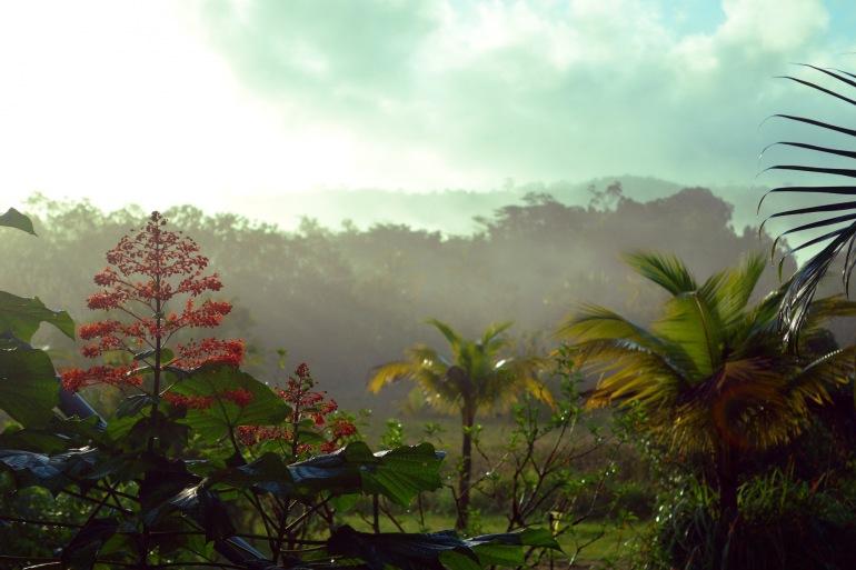 Rainforest view of guyana, South America_P
