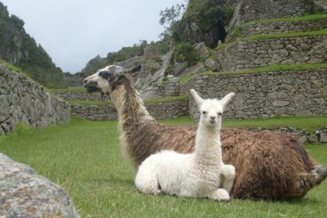 Peru by Land and Water tour
