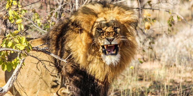 Kruger, Falls & Zimbabwe tour
