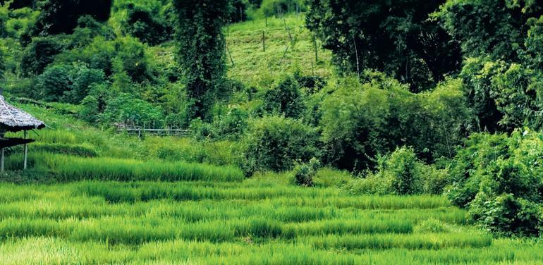 Beautiful Northern Thailand tour