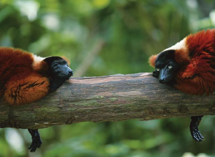 Experience Madagascar tour