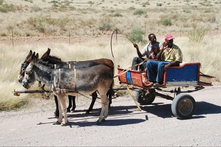 Donkey Cart at Namibia, South Africa