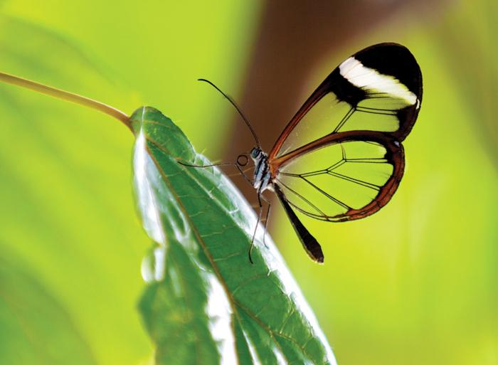 Nature & Wildlife Wildlife viewing Ecuador Amazon Wilderness- 4d (Sacha Lodge) package