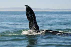 Journey to the Sea of Cortez - Whales of the Baja tour
